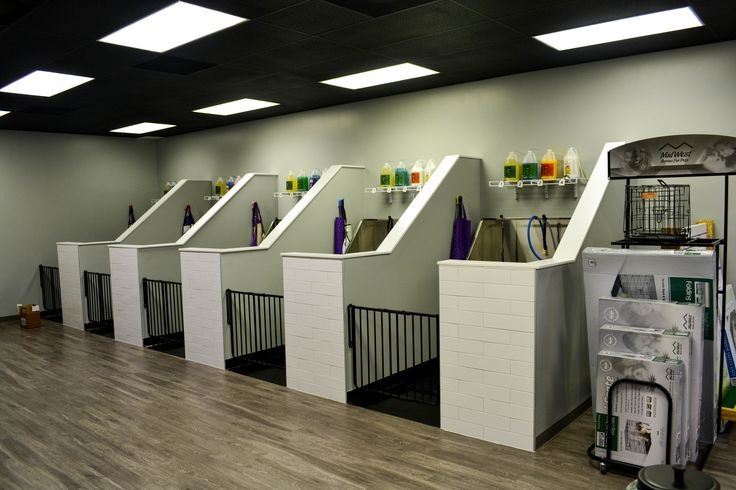 514 best images about daisy 39 s doggy daycare on pinterest for A bath and a biscuit grooming salon