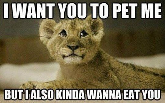 Confused baby lion…