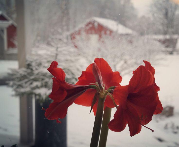 Jul och snö