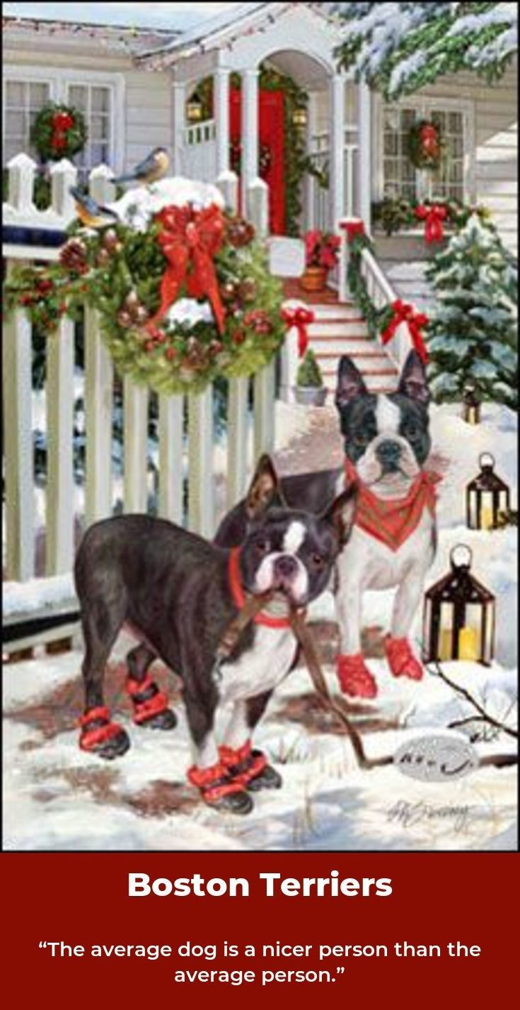 Boston Terrier Friendly And Bright Boston Terrier Christmas