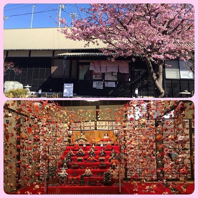 【natsuno_orion】さんのInstagramをピンしています。 《ただいま。 稲取でつるし雛も見てきました。みごとでした。感動でした! 稲取温泉はつるし飾り発祥の地だそうです。 ・ #雛のつるし飾り祭り #つるし雛 #雛のつるし飾り #稲取 #稲取温泉 #文化公園雛の館 #つるし飾り発祥の地 #お雛さま #伝統 #母から娘 #受け継がれてきた #春 #桜 #ひな祭り》