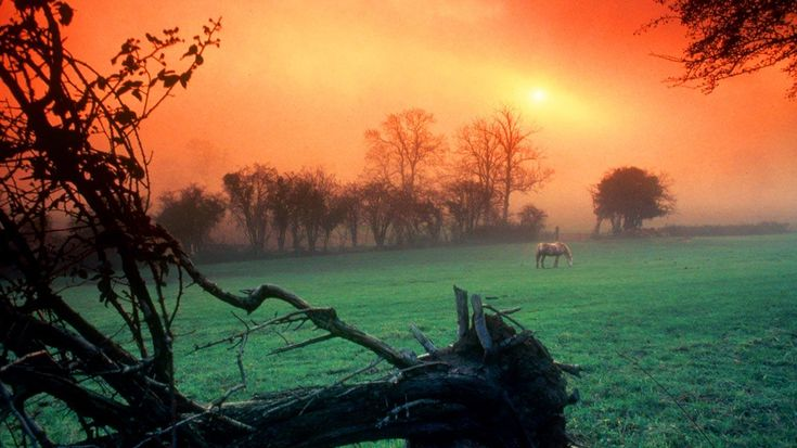 bing images My Love of Horses... Pinterest