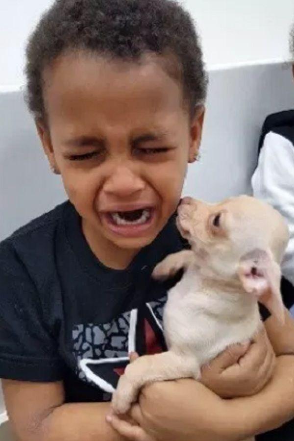 Little Boy Cries Over Cute Puppy This Little Boy Was Already
