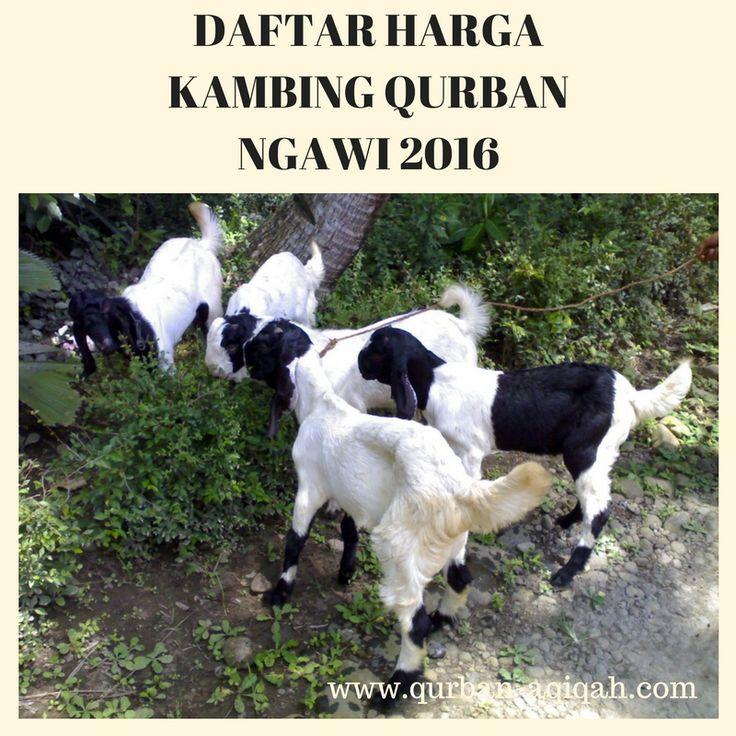 Daftar Harga Kambing Qurban Ngawi 2016