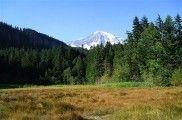 Los 18 mejores bosques del mundo