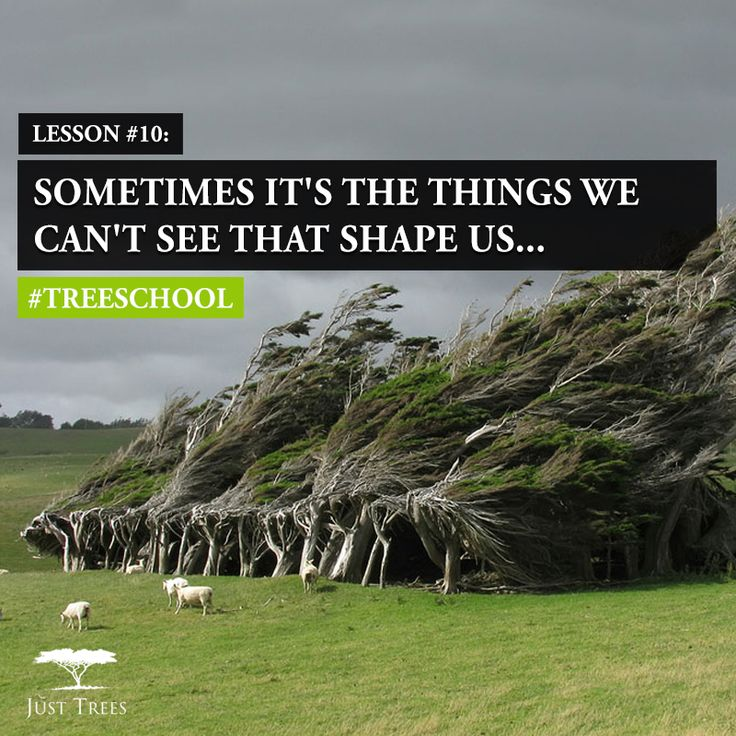 Lesson 10: Sometimes it's the things we can't see that shape us.