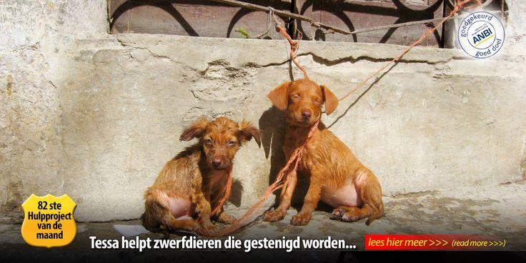 Dierennood is een stichting die zwerfdieren in het buitenland helpt door massa sterilisaties, het doneren van geld aan geselecteerde asielen en dierenartsen