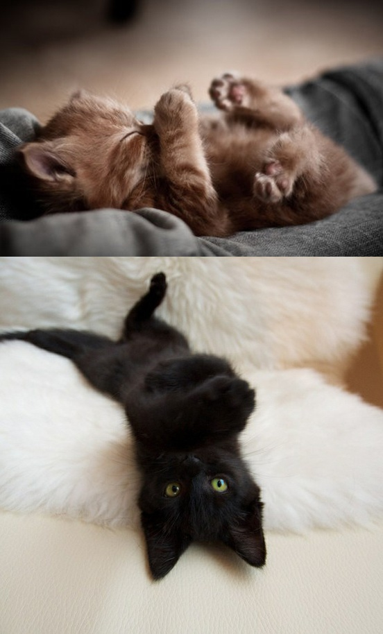 : Orange Cat, Baby Kittens, I Love Cat, Cat Naps, Adorable Things, Black Cat, Baby Kitty, Adorable Animal, Baby Cat