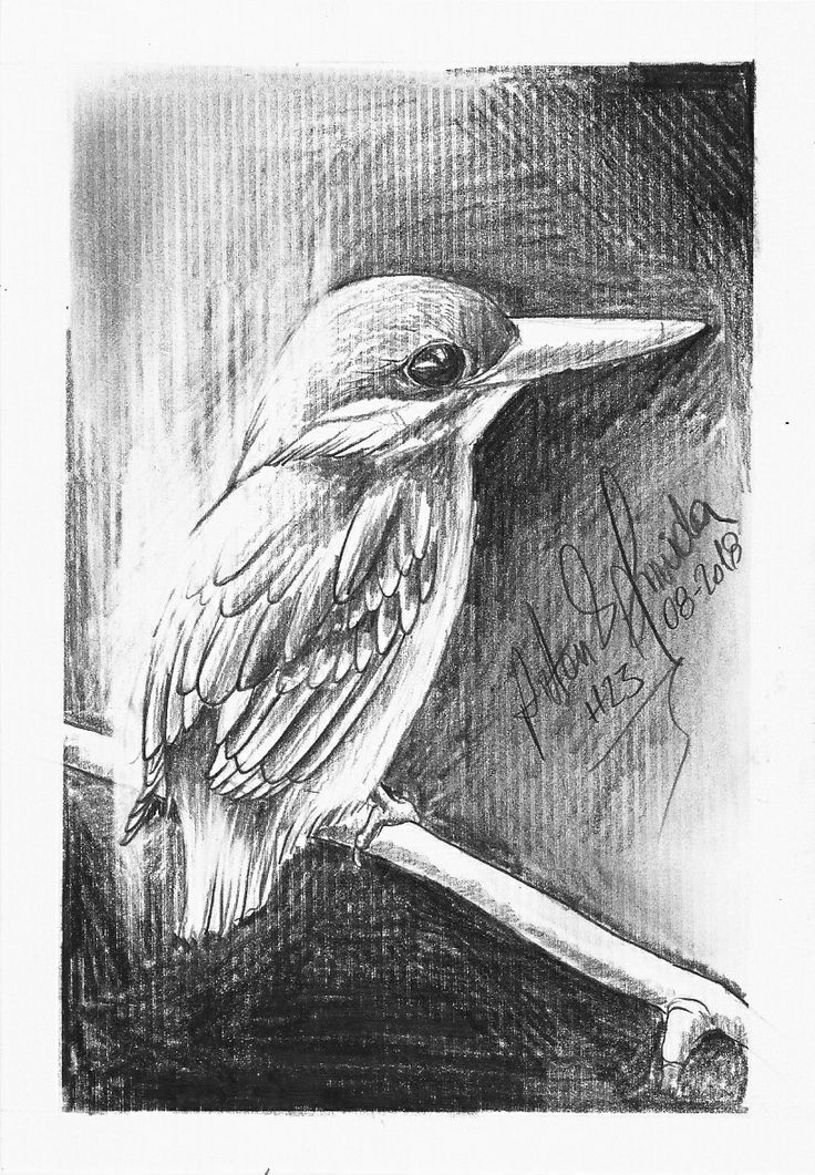 Nature Drawing 75 Picture Ideas Nature Drawing Pencil Drawings Drawings
