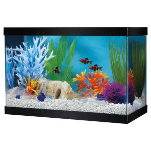 For a Low Light Plant Display. Great Choice® 2.5 Gallon Glass Aquarium & Canopy | Aquariums | PetSmart