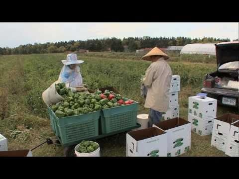 This is a video about Minnesota Food Association - Big River Farms. The Minnesota Food Association is a non-profit that trains immigrant farmers how to farm organically and sustainably in Minnesota. Big River Farms offers a CSA, and some of the individual farmers sell at local farmers' markets.