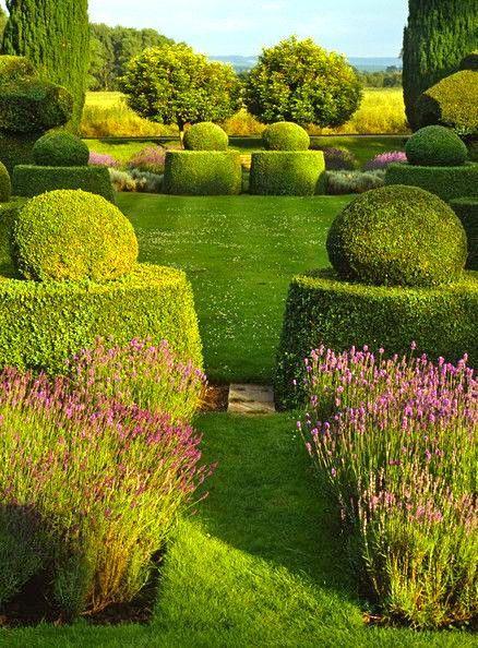 oltre 25 fantastiche idee su arbusti su pinterest piante