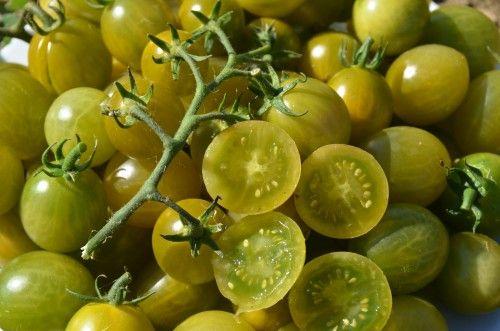 "Variété de tomate cerise verte créée par Tom Wagner.  ""Verde Claro"""