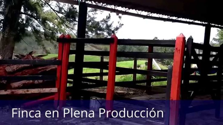 En Venta Granja Productiva en Marinilla, Antioquia, Colombia