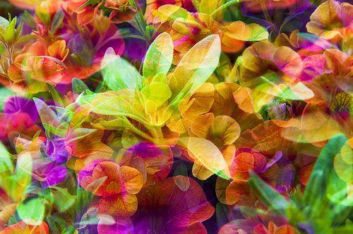 Flora Colora