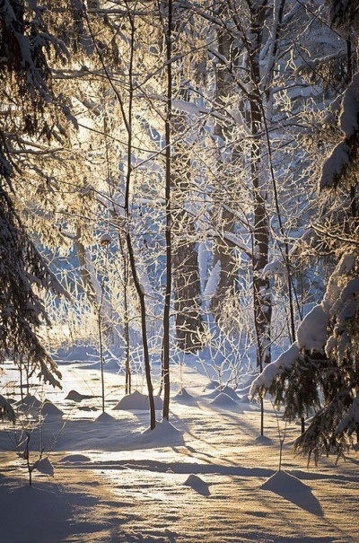 Vinterbilder (detstorehusetpaaprerien) - winter forest