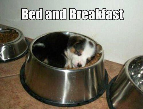 This is too adorable :): Breakfast In Beds, Puppies, Dogs, Beds And Breakfast, So Cute, Food, Socute, Bowls, Animal