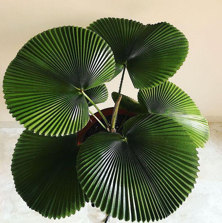 39 Smart Ideas To Display Indoor Plants
