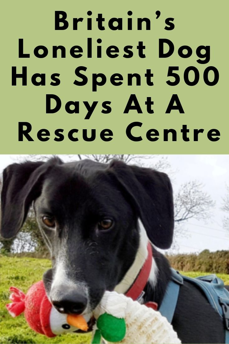 Britain S Loneliest Dog Has Spent 500 Days At A Rescue Centre Dog Activities Dogs Pet Birds