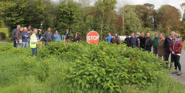 Dr Fran Igoe explaining the invasive species of plant which has hit Duhallow. http://www.independent.ie/regionals/corkman/lifestyle/volunteer-army-tackle-a-very-knotty-problem-30684830.html #invasive #river