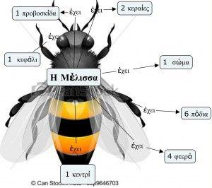 H μέλισσα έχει τόσα