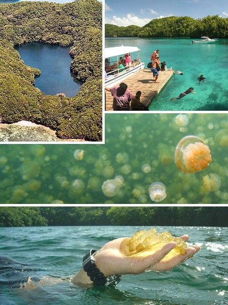 Jellyfish Lake, Palau. I want go here bad!!! I would love to swim with the jellyfish! Maybe one day.......