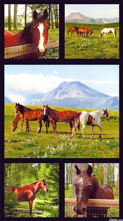 Horse Country Mountains Plains Amp Ponies Digital Print