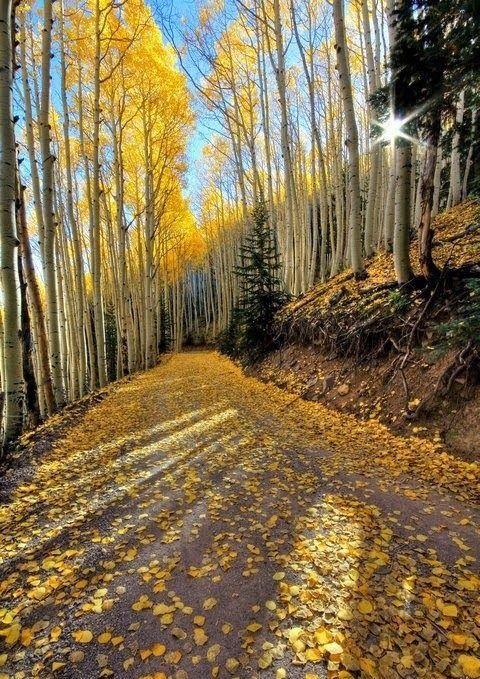 Waterline Road Flagstaff, Arizona