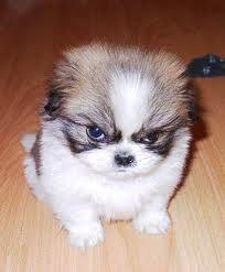 grumpy pup! lol