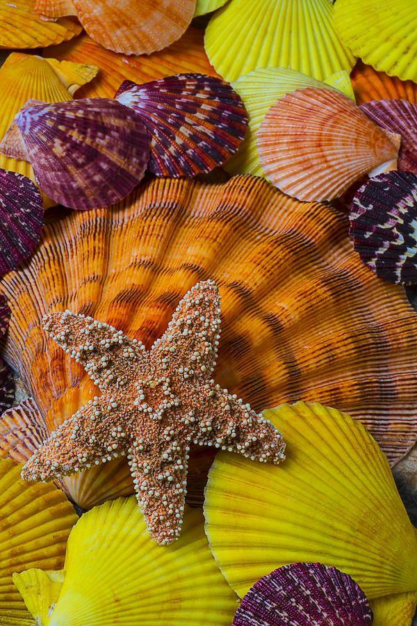 Starfish With Seashells Photograph  - Starfish With Seashells Fine Art Print