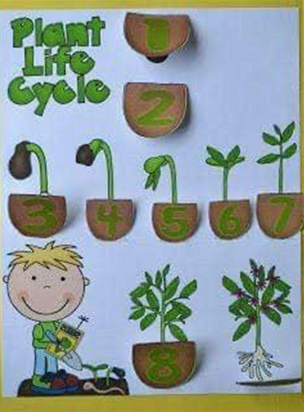 وسائل تعليمية للعلوم لرياض الاطفال من خامات البيئة سهلة بالعربي نتعلم Garden Crafts For Kids Planting For Kids Plant Crafts