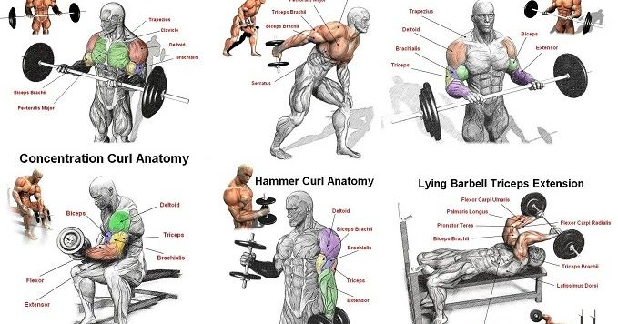 The Best Arm Workout For Mass And Strength http://www.all-bodybuilding.com/2016/10/the-best-arm-workout-for-mass-and.html
