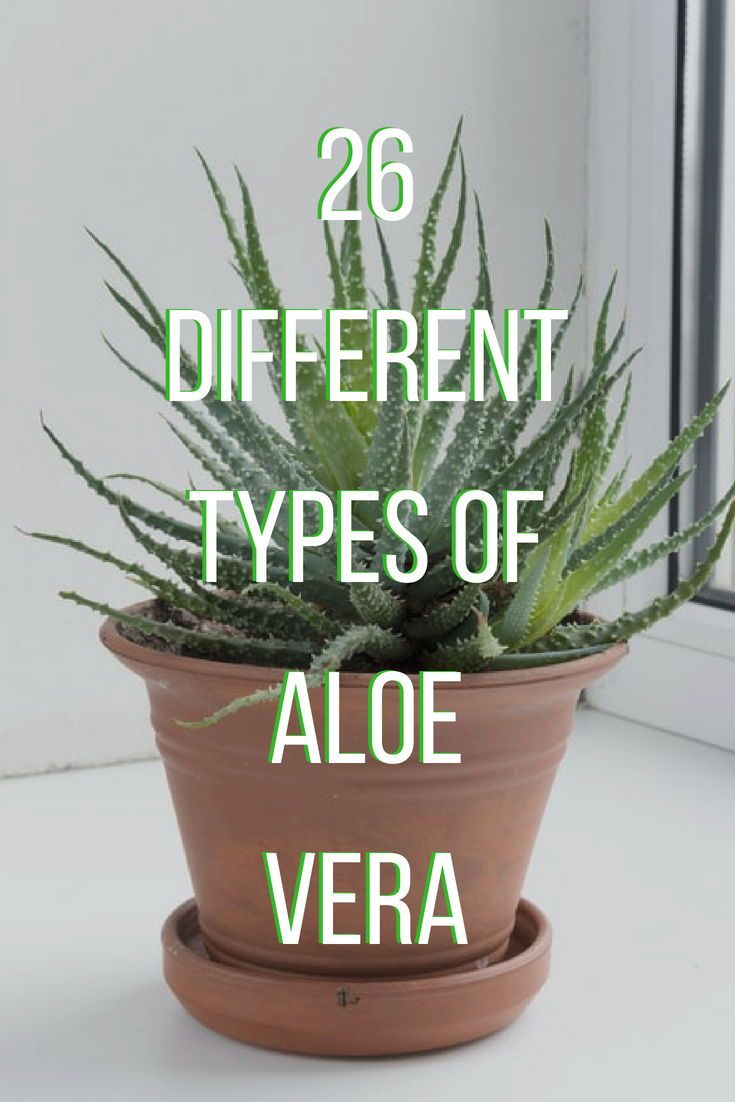 26 Different Types Of Aloe Vera House Plants Indoor