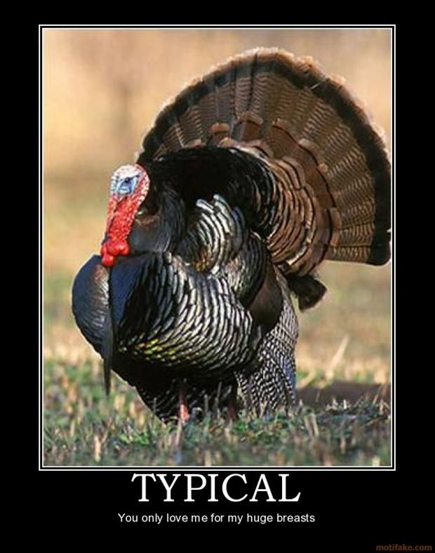 Actually I'm a leg man (with turkeys).