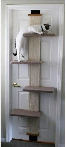 Cat Climber - Hooks over a door! I have this in my tiny apartment, my cats love it!