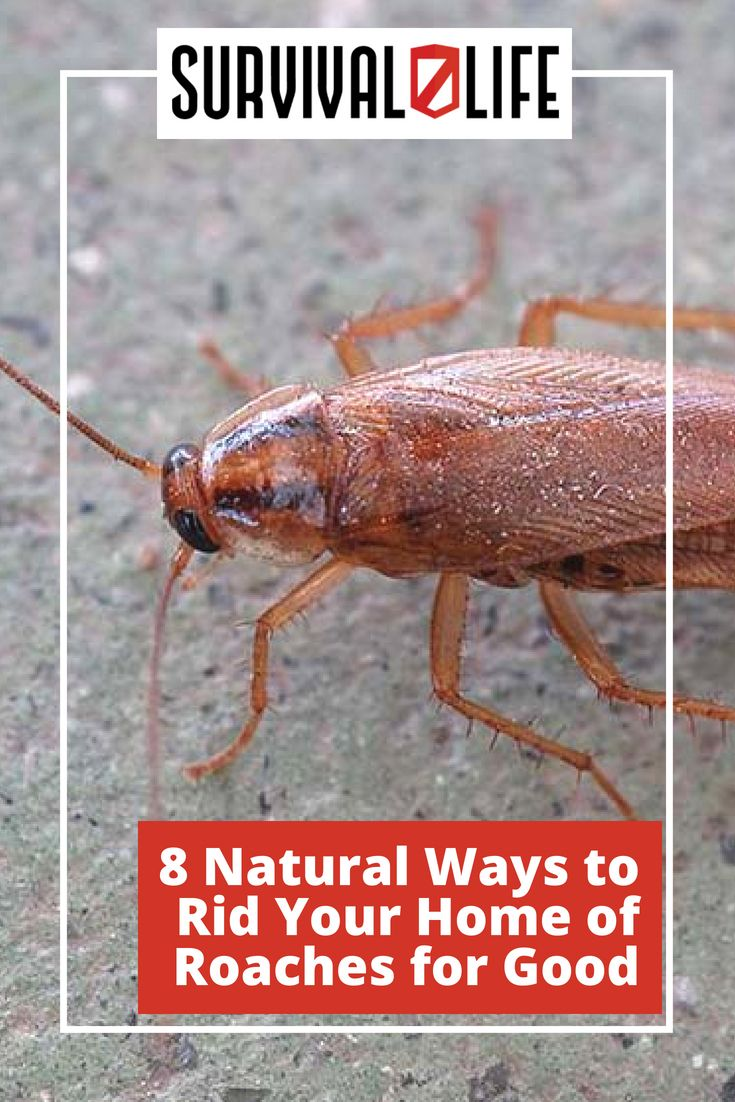 Ways To Rid Your Home Of Roaches For Good Survival Life