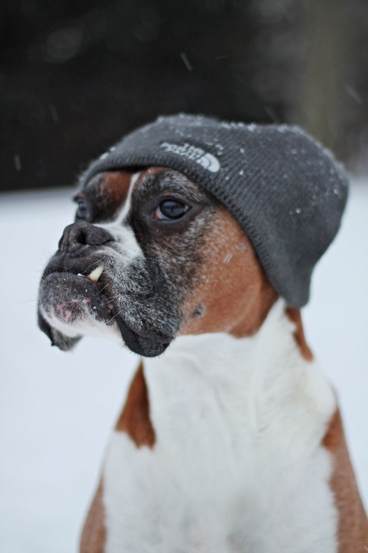 Im a sucker for an underbite a?? dude! you are so cool! | See more about Boxers, You Are and Hats.