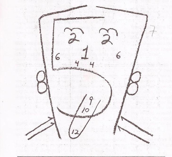 Remembering cranial nerves