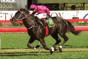 Lonhro (AUS) 1998 (Octagonal-Shadea); starts: 35 wins: 26-3-2; Earnings: $5,790,510, Champion Sire of Australia in 2010.