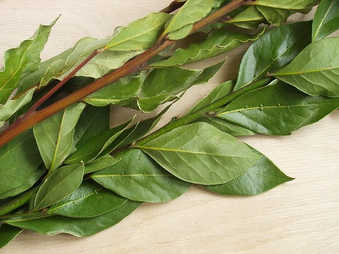 Что может лечить лист лавровый!