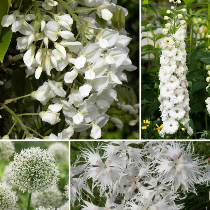157 best jardin blanc images on pinterest | plants, white flowers