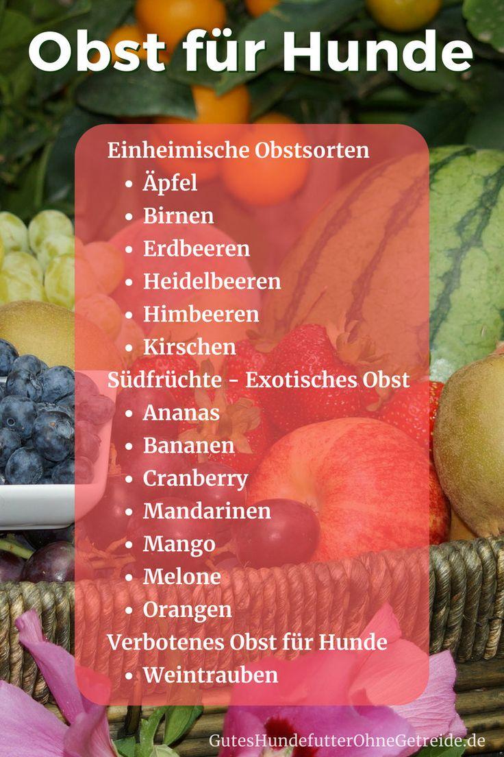 Welches Obst dürfen Hunde essen? Gesunde Früchte vs. giftige Obstsorten – Marie Sophie