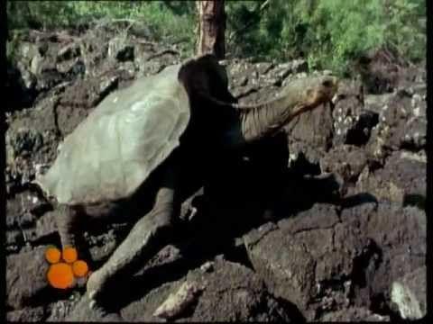 Χελώνες- Ο μαγικός κόσμος των ζώων