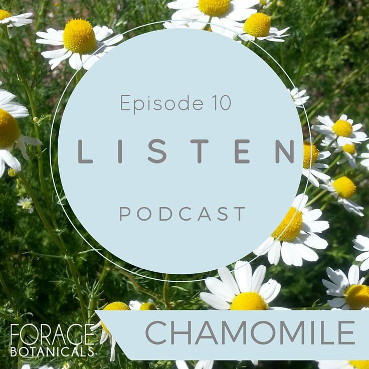 PODCAST: Chamomile with LucyBlundenHerbalist