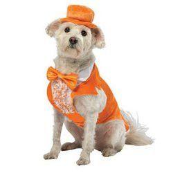 Rasta Imposta Dumb and Dumber Lloyd Orange Tuxedo Dog Costume, X-Small
