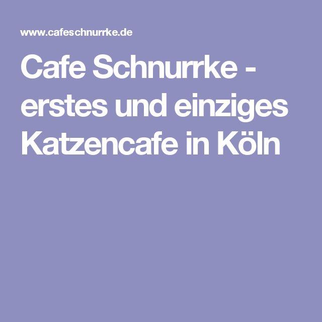 Cafe Schnurrke - erstes und einziges Katzencafe in Köln