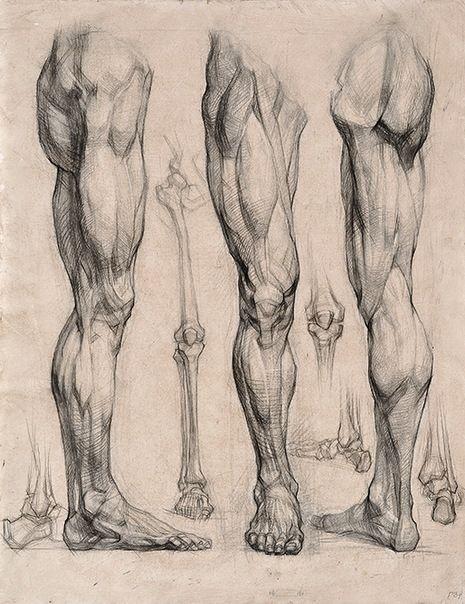 Músculos y huesos de las piernas