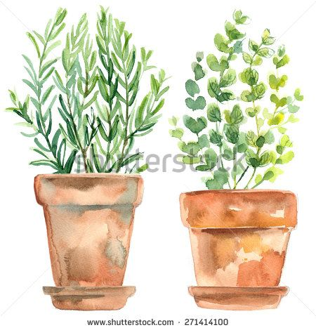 watercolor sketch of terra cotta pot - Google Search