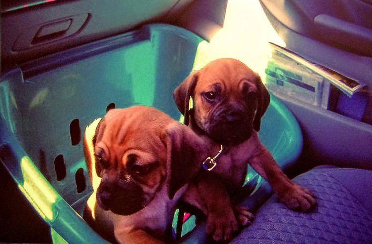 Wouldn't you cross the street for these puppies? I would!