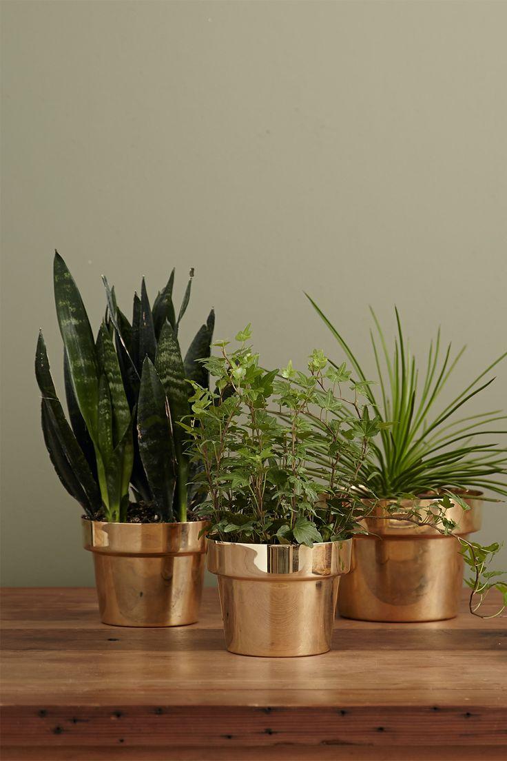 Éstas te pueden traer muchos más beneficios de lo que crees. Exotic Plants, Green Plants, Painting The Roses Red, Buy Plants Online, Living Room Plants, Low Light Plants, Inside Plants, Ceramic Pots, Hanging Pots